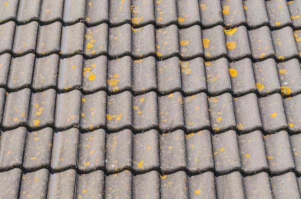 Wash & Treat Algae on Roofs