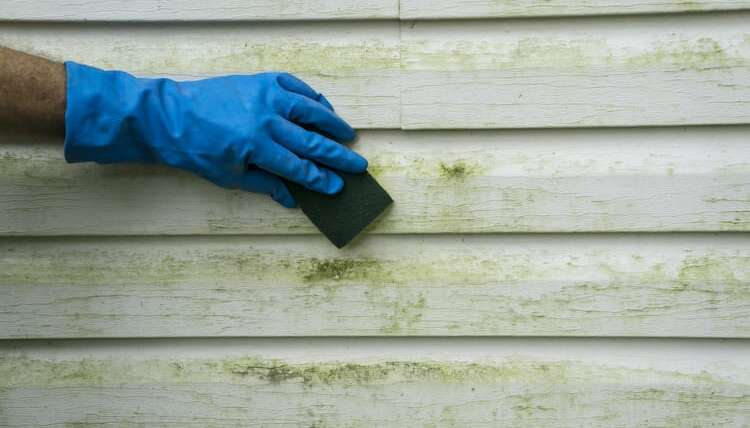 Preventing Algae from growing on your exterior siding