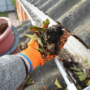 Tips from a Slidell Roof Cleaning Company: Why is Gutter Cleaning so Important?